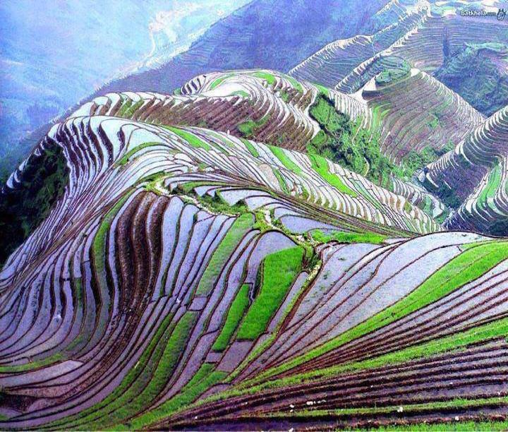 rice-field_-yunnan_-china