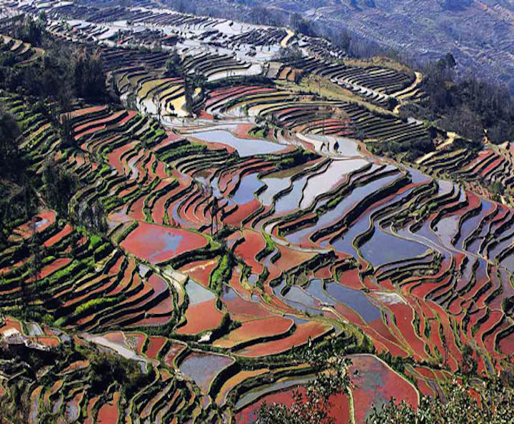yuanyang-rice-terraces-312474