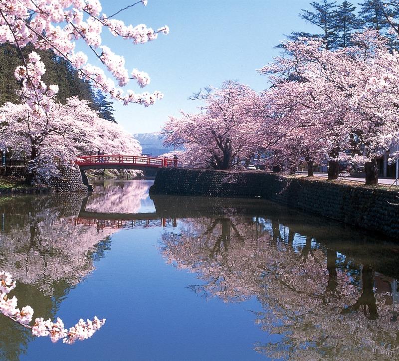 Sakura en el parque Tsuruoka (prefectura de Yamagata)