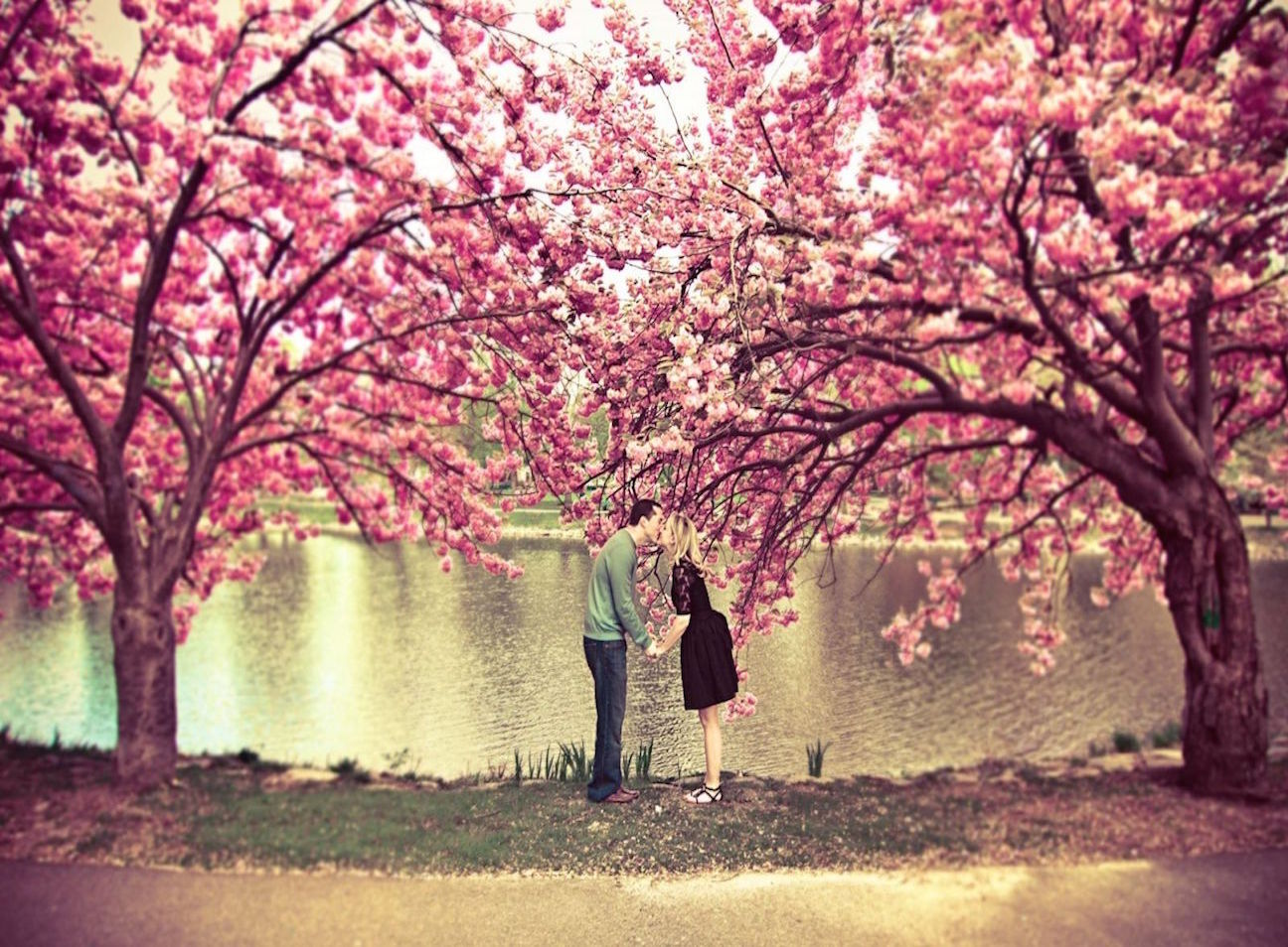 sakura-tree-flower-spring-pond-couple-kiss-love-nature