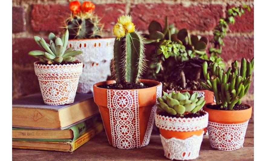 plantas-tener-en-un-jardin-con-masetas