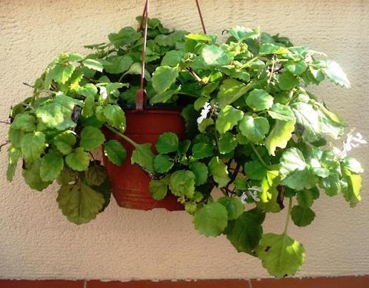 5 plantas que atraen dinero a tu vida mujer chic for Suculentas chile